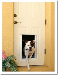 Pet Access Doors